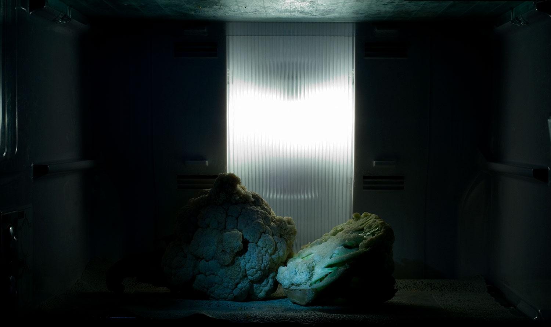 Prajakta Potnis, <em>still life,</em> 2010